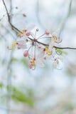 Freshing του λουλουδιού Στοκ φωτογραφίες με δικαίωμα ελεύθερης χρήσης