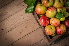 Freshly  apples in an old vintage wooden crate Stock Photo