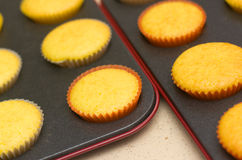 Freshly backed cupcakes on a backing tray. Shallow depth of field Royalty Free Stock Images