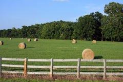 Freshly bailed hay Stock Image
