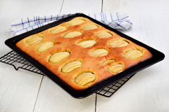 Freshly baked apple tray cake Royalty Free Stock Photo