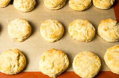 Freshly baked biscuits or scones Stock Photography