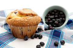 Freshly Baked Blueberry Muffin Stock Image