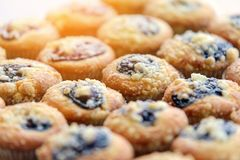 Blueberry Muffin. Freshly baked Blueberry Muffin - snack stock photos