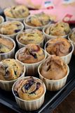 Freshly baked blueberry muffins Royalty Free Stock Images