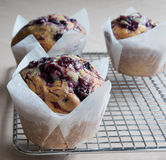 Freshly Baked Blueberry Muffins Cooling. Royalty Free Stock Photography