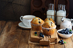 Freshly baked blueberry muffins in a rustic setting. With milk and coffee on the table with copyspace royalty free stock photo