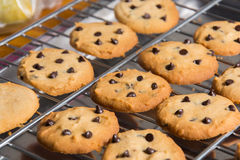 Freshly baked chocolate chip cookies on cooling rack. Stock Photos