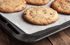 Freshly baked chocolate chip cookies. With cooling rack in soft focus in background royalty free stock photography