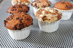 Freshly baked chocolate chip muffin Stock Photography