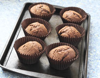Freshly baked chocolate cupcakes. Home made chocolate cupcakes straight from the oven, on a metal tray Stock Photography