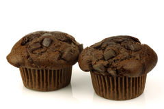Freshly baked chocolate muffins Stock Image