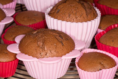 Freshly baked chocolate muffins cooling on metal tray Royalty Free Stock Image