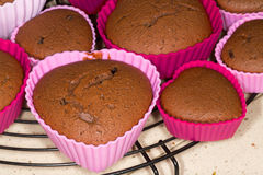 Freshly baked chocolate  muffins cooling on metal tray Royalty Free Stock Photo