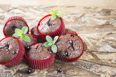 Freshly baked chocolate muffins with currant and mint in red forms. On wooden table Royalty Free Stock Images
