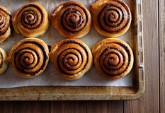 Freshly baked cinnamon rolls buns with cocoa and spices on a metal baking sheet. Close-up. Royalty Free Stock Photo