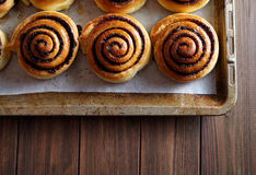 Freshly baked cinnamon rolls buns with cocoa and spices on a metal baking sheet. Close-up. Top view. Royalty Free Stock Image
