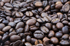 Coffee Beans Background. Freshly baked coffee beans covering the whole frame Royalty Free Stock Image