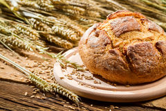 Freshly baked country bread from a healthy grain Royalty Free Stock Photography