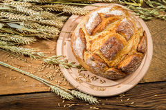 Freshly baked country bread Stock Images