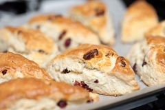 Freshly baked cranberry scones Stock Photos