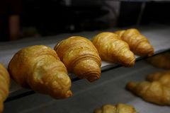 freshly baked croissants in the baking oven royalty free stock photos