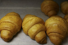 freshly baked croissants in the baking oven royalty free stock image