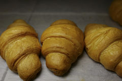 freshly baked croissants in the baking oven stock image