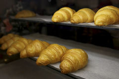 freshly baked croissants in the baking oven stock images