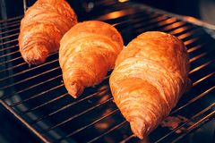 Freshly baked croissants on the oven rack Stock Image