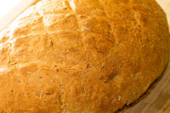 Freshly baked crusty loaf of white bread Royalty Free Stock Photography