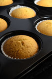 Freshly Baked Cup Cakes in Bun Tin with Paper Cases Stock Photography