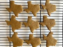 Texas shaped gingerbread cookies. Freshly baked ginger bread cookies on a wire rack royalty free stock photography