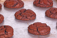 Freshly baked, home-made chocolate cookies still on the pan Royalty Free Stock Photography