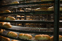 Freshly baked hot bread loafs on the production line.  Royalty Free Stock Photography