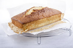 Freshly baked madeira cake on a tray Stock Photography