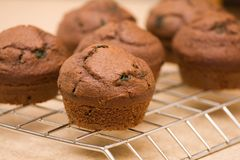 Freshly baked muffins. Six freshly baked chocolate-mint muffins cooling off on metal grid Stock Photo
