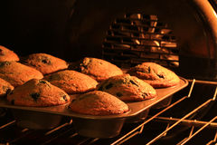 Freshly baked muffins Stock Image