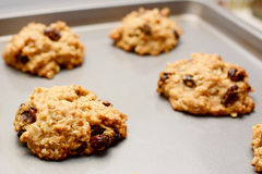 Freshly baked oatmeal raisin cookies Royalty Free Stock Image