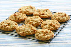 Freshly baked peanut butter cookies. On cooling rack Royalty Free Stock Photos