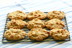 Freshly baked peanut butter cookies. On cooling rack Stock Images