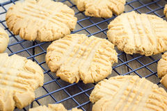 Freshly baked peanut butter cookies on a cooling rack Royalty Free Stock Photos