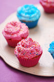 Freshly baked pink and blue cupcakes Stock Image