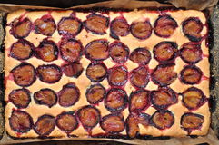 Freshly baked plum cake Royalty Free Stock Photos