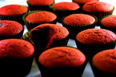 Freshly baked red velvet cupcakes Royalty Free Stock Photo