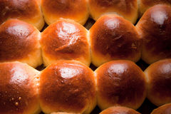 Freshly baked rolls only taken out of the oven. Toned Royalty Free Stock Photography
