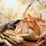 Freshly baked traditional bread Stock Photography