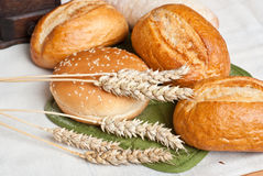 Freshly baked traditional rolls with ears of wheat grain Royalty Free Stock Photo