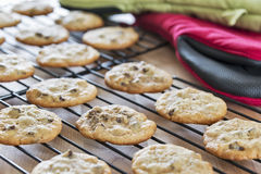 Freshly baked warm chocolate chip cookies cooling on wire racks Royalty Free Stock Photography
