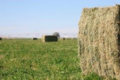 Freshly Baled Hay Field Stock Photo